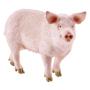 """Schleich""""Farm Life Schwein"""""""